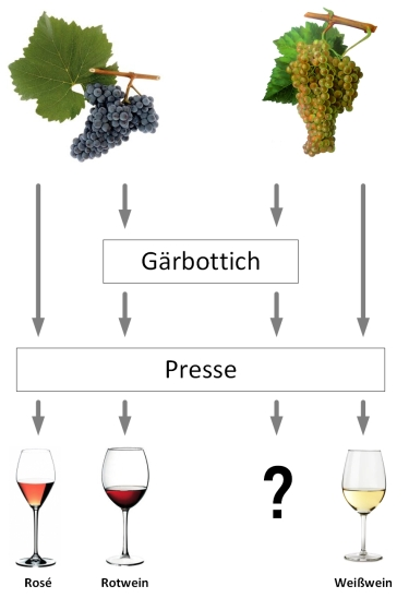 Winemaker Basics